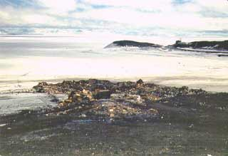 the McMurdo dump in the 1970's